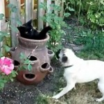 Cat and Pug Frolic in the Garden