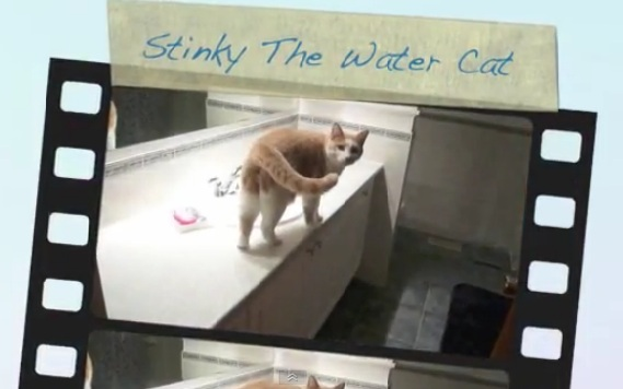 Stinky the Water Cat