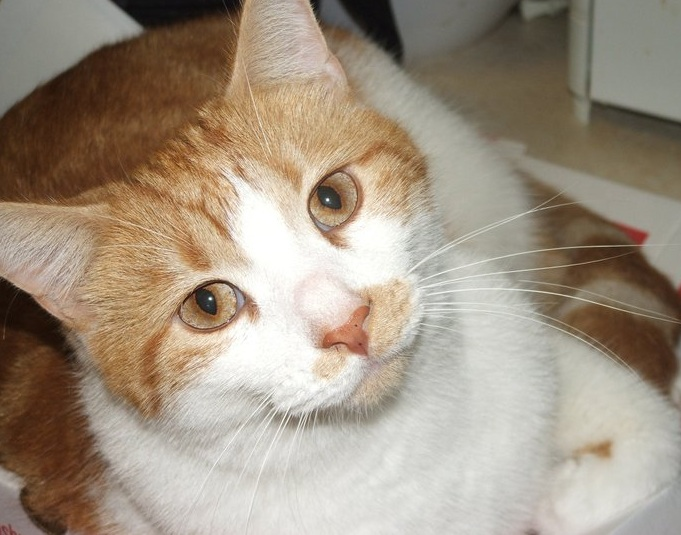 Understanding FeLV: Loving and Living With FeLV Cats - Life With Cats
