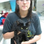 Bastrop TX Wildfire Cats: Faces of Disaster