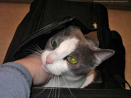 Canadian Medical Community Disapproves of Pets in Airline Cabins