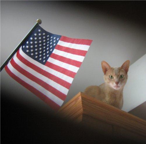 American Legion Helps Fight Cat Overpopulation