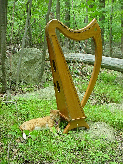Music Therapy Helps Soothe Animals and Humans Alike