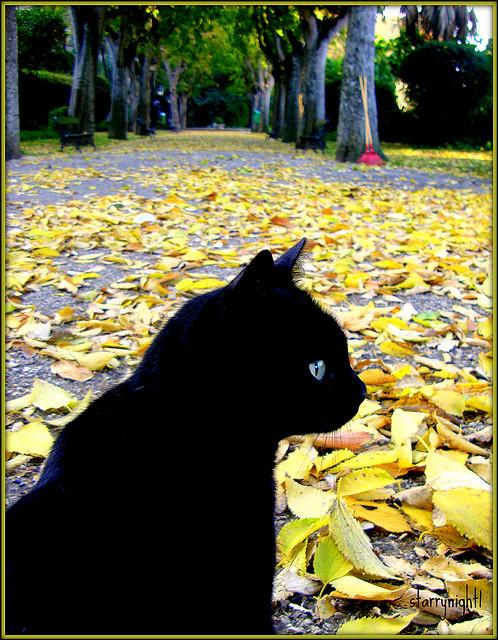 Kitties of Autumn
