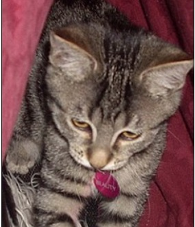 Cat at Center of Off-the-Wall Love Triangle Theft Case Still Missing