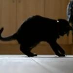 Cat vs. Twist Tie