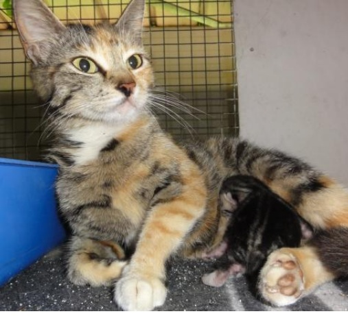 Mama Saves Herself and Her Kitten: Ava and Basil Safe at Durban SPCA