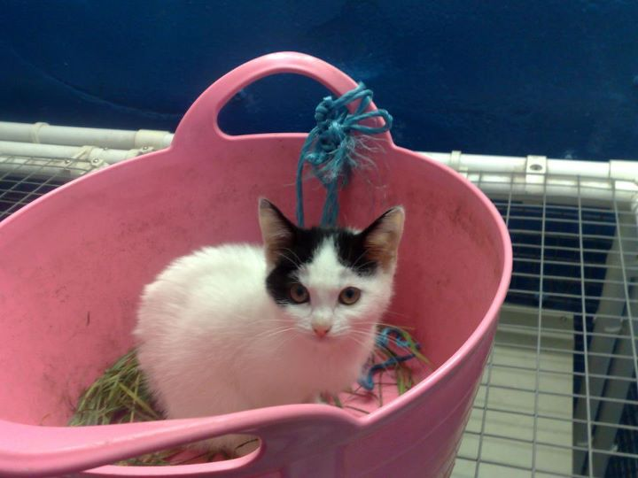 Two Boys Rescue Kitten Floating Down Leeds/Liverpool Canal In Basket