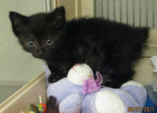 Tabitha Kitten Rescued from Dumpster, Fights to Recover in Oxygen Chamber