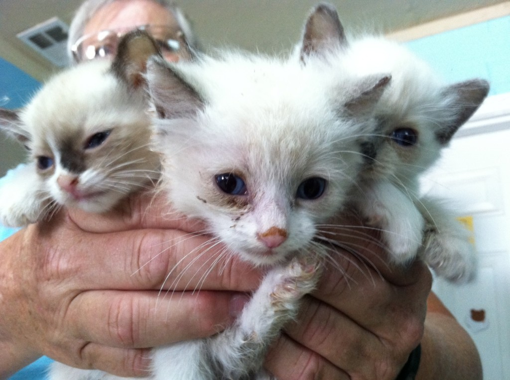 Yuma HS Rescue of Deceased Woman's Cats Underscores Importance of Planning