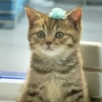 Bouygues Telecom Kittens Bring Cute To A New Level