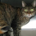 20 Year Old Tiana Dumped: Shelter Gives Her Priority And She Is Rescued
