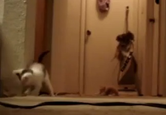 Kittens on the Vacuum Cleaner
