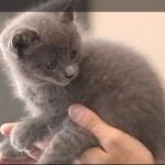 Update: Family Says Kittens Not thrown, Fell From Undercarriage of Minivan