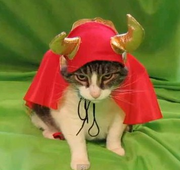 What Scares Cats on Halloween?