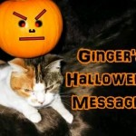 A Ginger The Cat Halloween Video