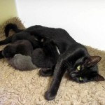 Abandoned Supermama Cat Jolie Leads Rescuer to Her Kittens