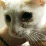 Happy Ending for Lily, Kitten Found Crying After Being Shot With BB Gun