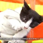 Publicity on Boy's Rescue Effort Brings City to Rescue Kitten