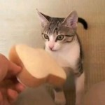 Kitten Playing Fetch With A Bread Toy #2: Box Edition