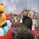 SF SPCA celebrates 25th year adopting pets through Macy's Union Square holiday window display