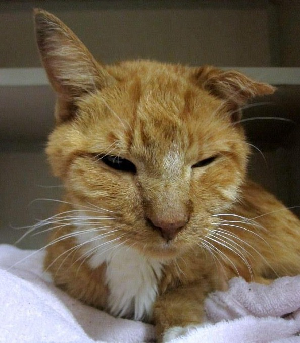 Update: The full story on Clark Kent, sick cat abandoned and found in gutter