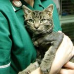 Cloudy the kitten gets new lease on life after first of its kind heart surgery