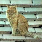 Dundee, Phoenix cat stuck on roof for several days comes down