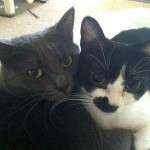 Noah and Allie, devoted to one another, need loving home as their parents are reassigned by the Army.