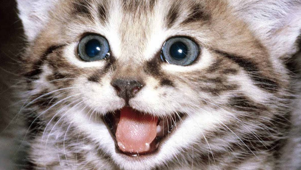 miraculous: tales of ladybug & cat noir season 1 episode 19