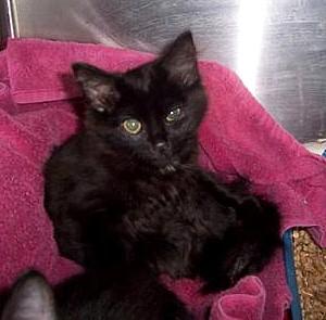 Stolen kitten returned to shelter after public plea