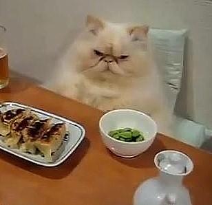Gourmet Cat