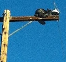 Gunner comes down; cat stranded atop pole is rescued