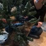 Oskar the Blind Kitten and the Christmas Tree