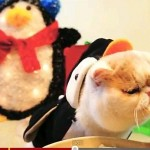 Holiday Birthday Kitty in Penguin Suit