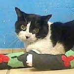 Rudolph the Cat Injured Seeking Warmth on a Car Engine