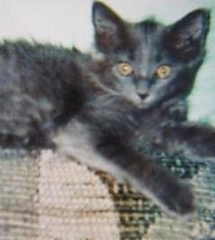 Arizona Humane Society faces outrage and institutes changes after Daniel Dockery's cat Scruffy is euthanized