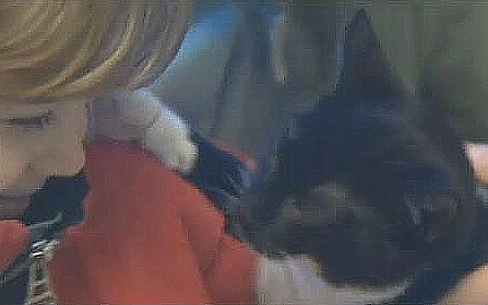 Shelter pets are given the gift of companionship at a Christmas Eve open house in Vermont