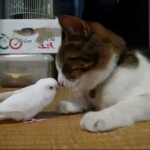 Bird wakes his best friend…a cat!