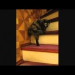 Cat Waltzes Up Stairs