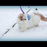 Kitty in Winter Wonderland: Jumbo Pillow's First Snow