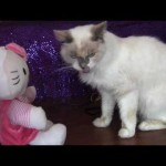 Cats Play in Slow Motion: Furball Fables