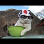 Shiro, in Fighting Spirit