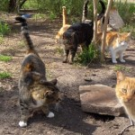 Petition Started For Man Charged For Feeding a NJ Cat Colony
