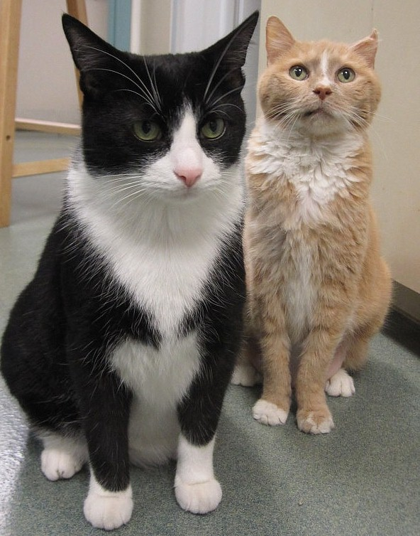 Chronic Renal Failure In Cats Causes Symptoms And Diagnosis Life With Cats