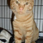 Cupid Inspires Love as He is Rescued and Helped Toward a Good New Life