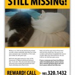 Missing Cat Search Hopes to Bring Mittens and Snowball Home