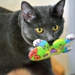 Smoky Represents Cats in Today's Cutest Pets and Makes a Name For Himself