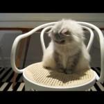 Catnip Box