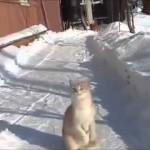 Snow Catcher Cat